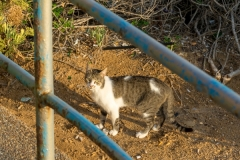 Netanya ©SCP-SA706228