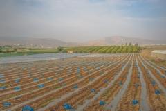Huleh Valley ©SCP-SA707508U