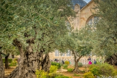 Gethsemane ©SCP-SA708659A2