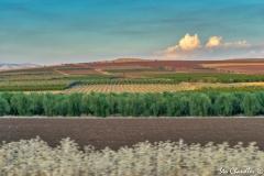 Galilee ©SCP-SA706538A