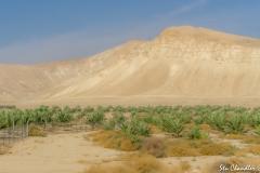Dead Sea ©SCP-SA707543