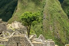 Perú - Machu Picchu (2010)