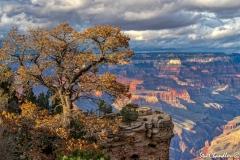 Grand Canyon (2018) SA705124