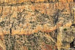 Grand Canyon (2018) SA705140