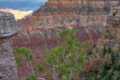 Grand Canyon (2018) SA705177